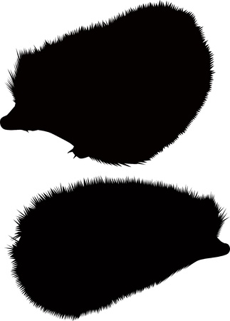 hedgehog animal isolated Фото со стока - 14322512