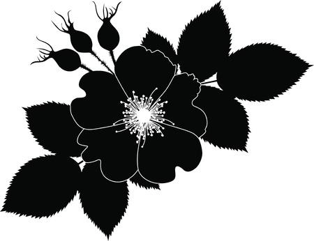 rose dogrose flowers