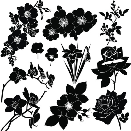 branch to grow up: colecci�n de colores aislado en un vector de fondo blanco Vectores