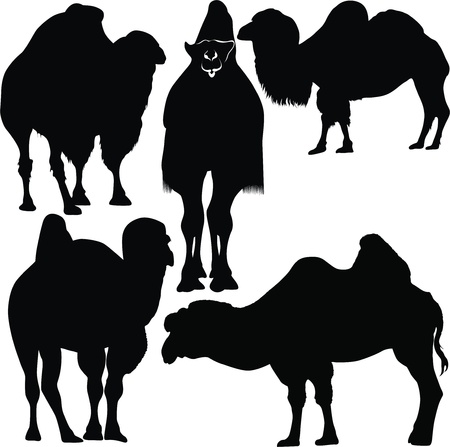 animals camel vector Stock Vector - 14357095