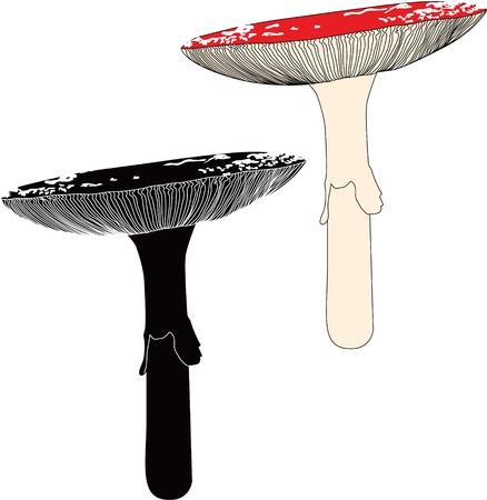 mushroom fly agaric vector Stock Vector - 14357104