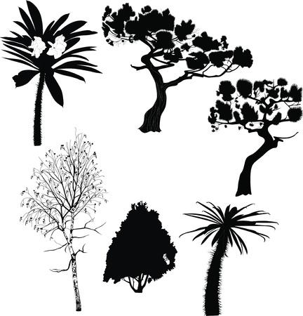 one sheet: pine thuja fir Birch Palm cactuses Fur-tree  Illustration