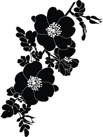 dessin noir blanc: rose fleurs dogrose il est isol� des vacances Illustration