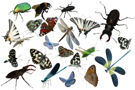 Butterflies, dragonfly, a grasshopper, other insects isolated a white background