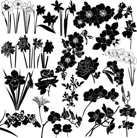 branch to grow up: colecci�n de vector de colores sobre fondo blanco
