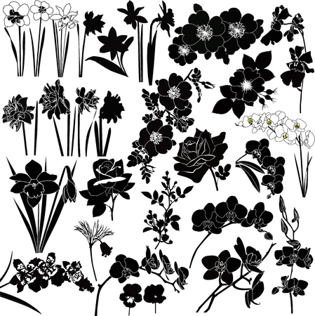 orchids: collection of colors vector isolated on white background  Illustration
