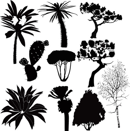 trees and plants of tropical countries fur-tree birch palm  Stock Vector - 14450603