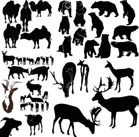 black tail deer: animal