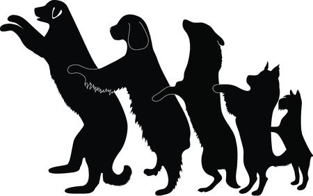 dog walk:  dog