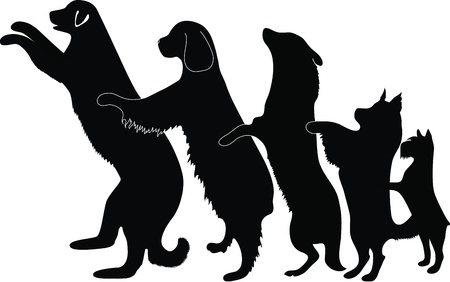 animal nose: perro