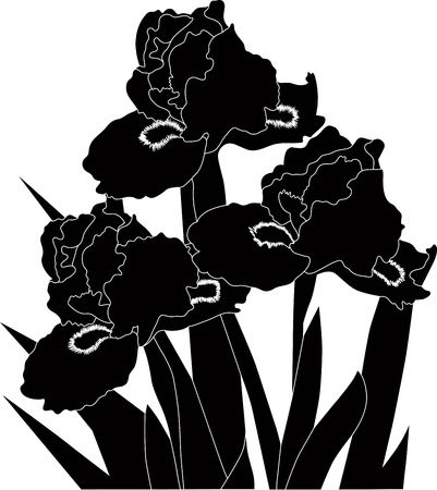 irises flowers it is isolated a holiday  Vector