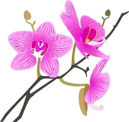 Fleurs d'orchidées, il est isolé