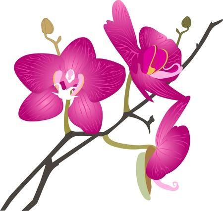 Orchideeën bloemen het wordt geïsoleerd Vector Illustratie