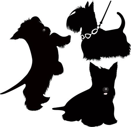 dog white background: dog Scotch-Terje animal isolated Illustration