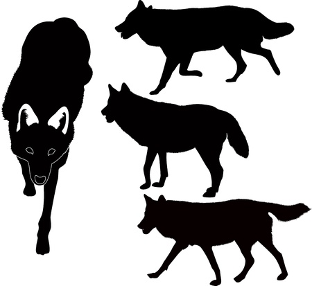 wolves animals vector isolated on white background Illustration