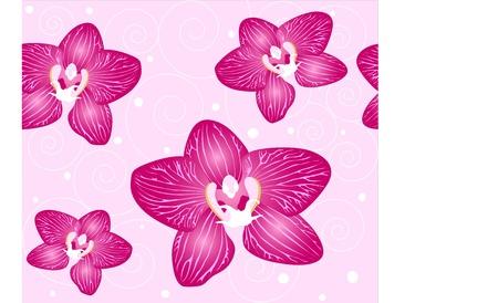 branch to grow up: flores sin fisuras de fondo de la orqu�dea en el fondo de color rosa Vectores