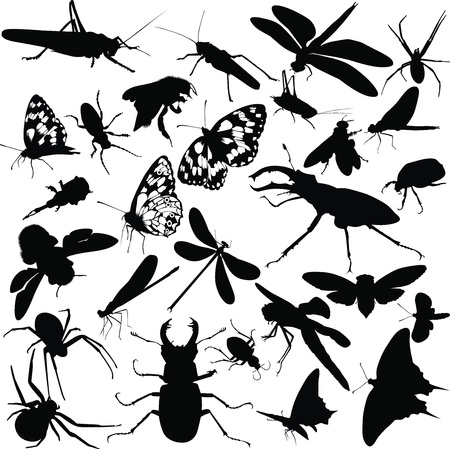 insects animals