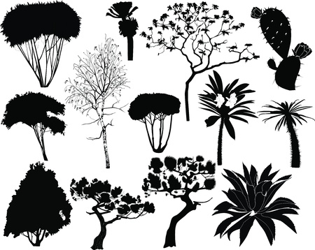trees and plants of tropical countries fur-tree birch palm  Vector