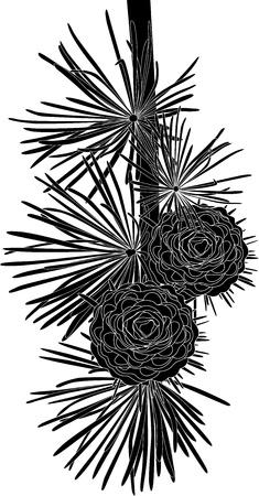 abeto: galho enfeitar �rvores de Natal a partir de cones isolados no fundo branco Ilustração