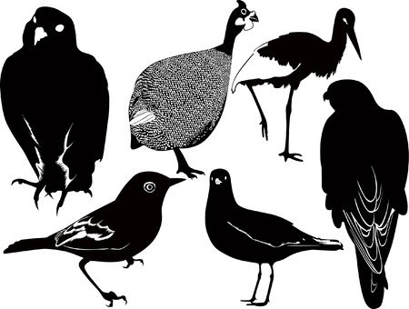 birds on a white background Imagens - 14702758