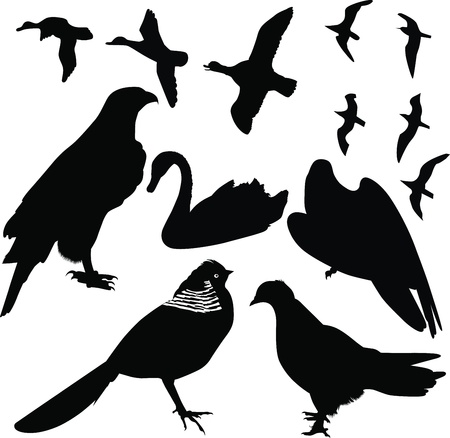 birds vector isolated on white background Vector