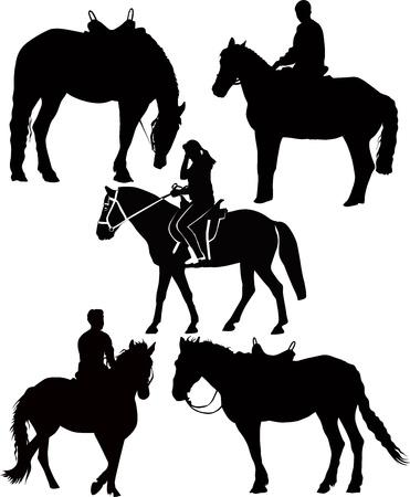 caballos de deporte ecuestre animales aislados sobre fondo blanco