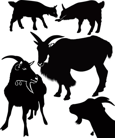 grazed: goat kids animals isolated white background Illustration