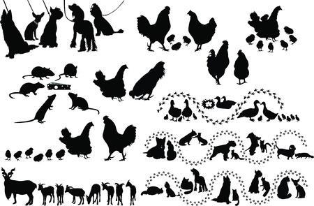 Animal birds dog cats hen duck rat goats isolated white background  Ilustracja