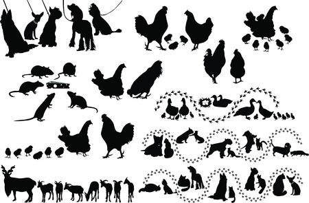 Animal birds dog cats hen duck rat goats isolated white background  Illustration