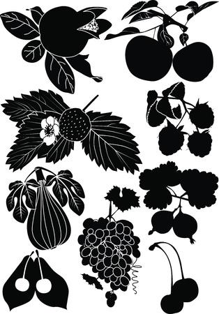 feuille de vigne: raisins figuiers de grenades d'un fruit branche cerise berry Illustration