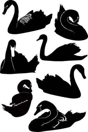 swans birds isolated on white background Stock Vector - 14984820