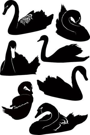 swans birds isolated on white background Ilustracja