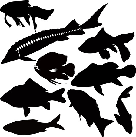 fish vector isolated on white background Stock Vector - 15063972