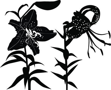 branch to grow up: Lily vector flores aisladas sobre fondo blanco