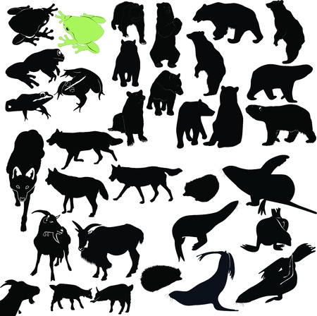 animals bears, seals, frogs, goats, wolves, dogs, Jerzy Vector