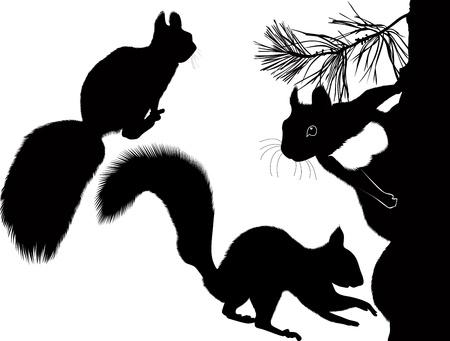 animales del bosque: ardilla animal, árbol de Navidad árbol Vectores