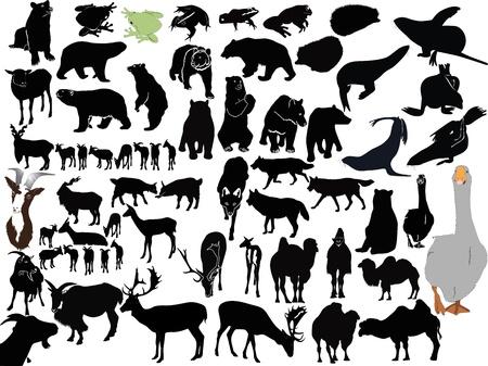 животные: Коллекция животных на белом фоне Иллюстрация