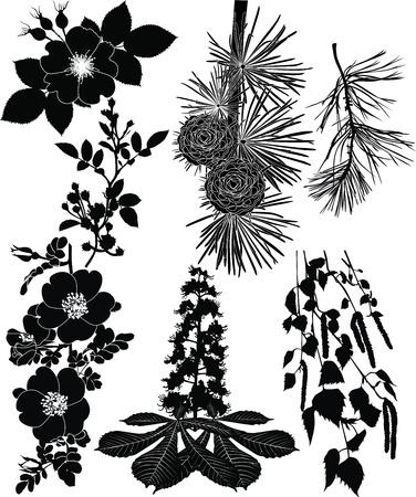No titlebirch branches, dog rose, rose, chestnut tree, pine Vettoriali