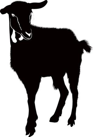 Goat animals isolated white background vector