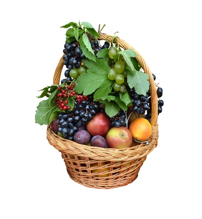 fruit basket with apples, grapes, plums, cranberry photo