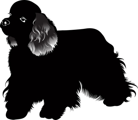 cocker: Cocker Spaniel Hund Vektor isoliert auf wei�em Hintergrund