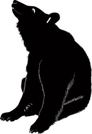 Bears animals  Иллюстрация