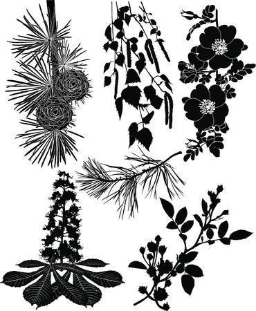 the pine tree: ramas de los �rboles arbustos, flores rosa mosqueta abedul, casta�o
