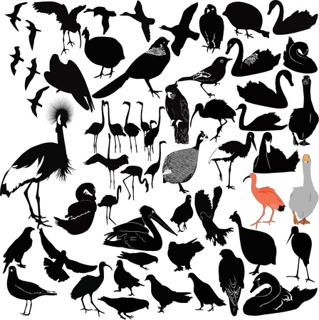 bird wings: birds on a white background