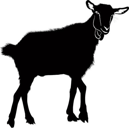 geit: Jonge geiten dieren geïsoleerde witte achtergrond vector