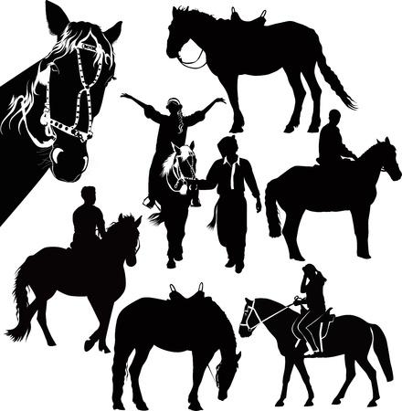 le sport équestre chevaux animaux isolés sur fond blanc