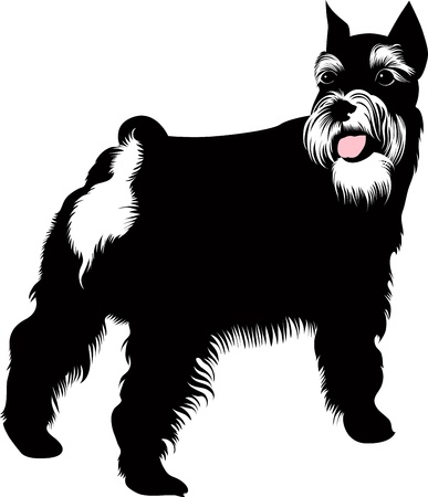 Zwergschnauzer dog vector isolated on white background  Vector