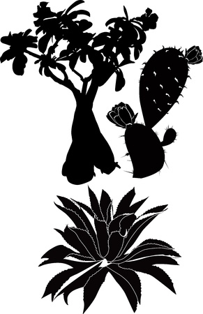 thorn bush: trees and plants of tropical countries  Illustration