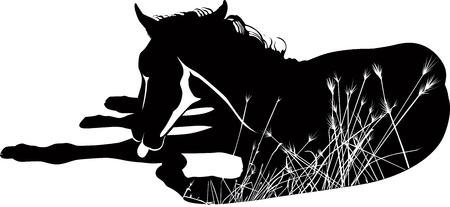 Cavalli di un animale cavallo è isolato