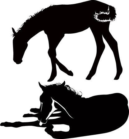 foal: Horses of a horse animals it is isolated